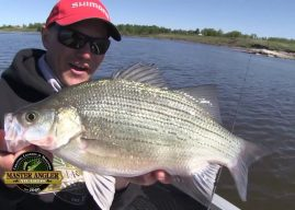 Manitoba Master Angler Minute – Fishing for Huge White Bass