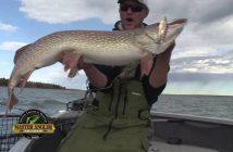 Giant Northern Pike Fishing in Manitoba – Manitoba Master Angler Minute